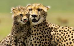Bestday Safaris