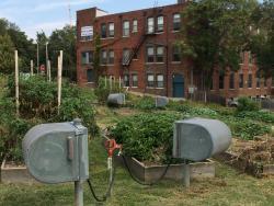 18 Broadway Urban Garden