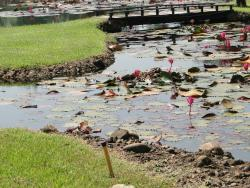 Pond in Golf Course/Lawns