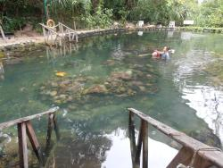 coral nursery, kids love it, andaman hotel