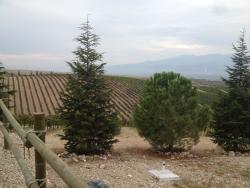 Kavaklidere Anatolian Wines