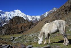 Himalayan Caravan Adventure