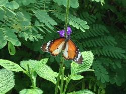 Tampines Changkat Butterfly Garden