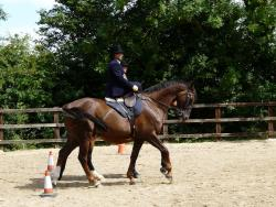 Hot to trot School of Equitation