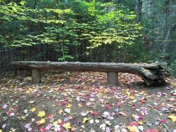 Henry's Woods