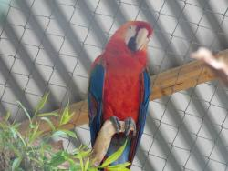 Parque Zoo Concepcion