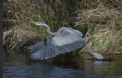 Great Blue Heron Nature Reserve