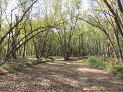 Mazomani Trail