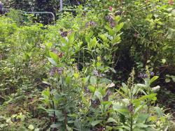 凤园蝴蝶保育区