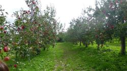 Yamamoto Fruits Farm