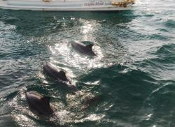 Amakusa Dolphin Information