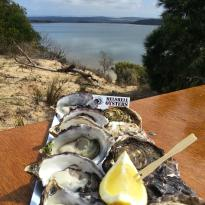 Melshell Oysters