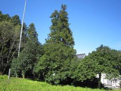 Gikoji Temple