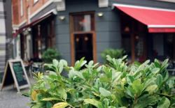 Cafe Bizzaro