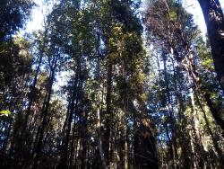 Monumento Natural Lahuen Nadi