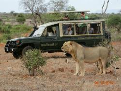 Malik Safari