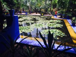 Jardin Majorelle