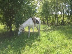 Husar Riding Centre