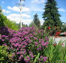 Inspiration Garden