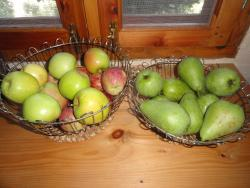 appless & pears grown in the Orchard