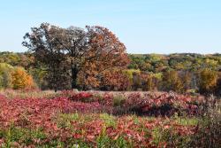 Owens Conservation Park