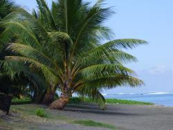 Vahine Vata Beach Restaurant
