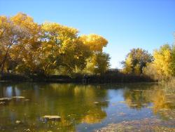 Leonora Curtin Wetland Preserve