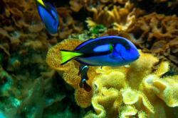 Risor Akvarium