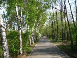 哈爾濱森林公園