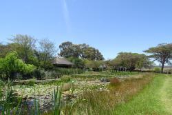Lily pond in the hotel grounds