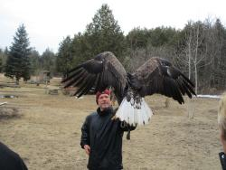 Ontario Falconry Centre