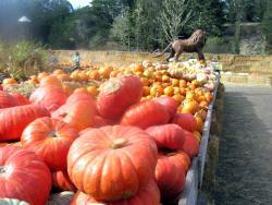 Arata Pumkin Farm
