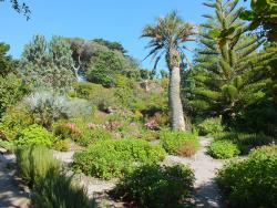 Tresco Abbey Garden & Valhalla Collection