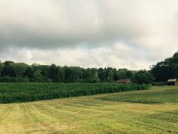 Verde Vineyards