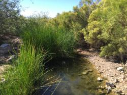Riparian Preserve at Water Ranch