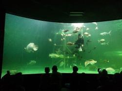 Songkhla Aquarium