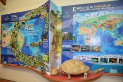 Lord Howe Island Museum