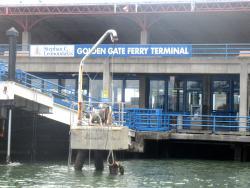 Golden Gate Sausalito Ferry