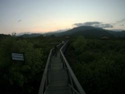 Ekosistem Mangrove
