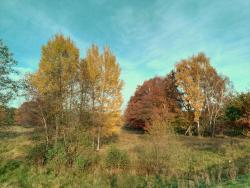Naturschtuzgebiet Holtigbaum