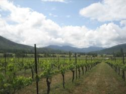 LongSword Vineyard