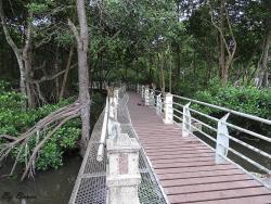 Mangrove Swamp Park
