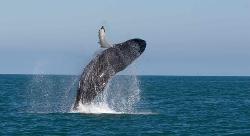 Mirissa Whale Watching Club