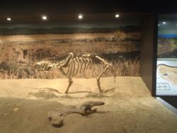 Museum of Central Australia
