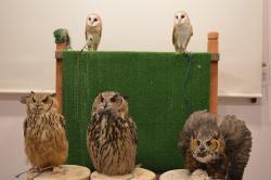 Owl Cafe & Bar Owl Village, Harajuku