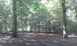 Ruislip Woods National Nature Reserve
