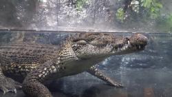 Alligator Alley Adventures