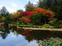 ‪Seattle Japanese Garden‬