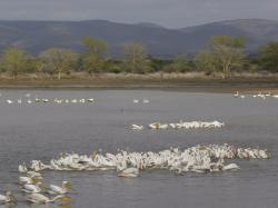 Flamingo ensemble at Nsumo Pan