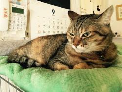 Cat Cafe Kedama